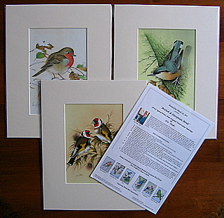 Robin Nuthatch Goldies with Backsheet