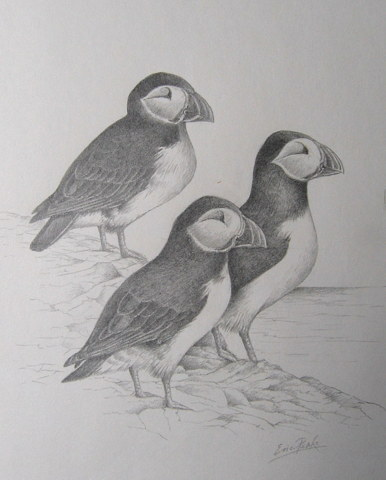 Trio_of_Puffins_Original_Pencil_2014